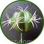 Кактус 4 см, растение искусственное