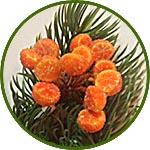 Половинки апельсина микро, в инее, на проволоке
